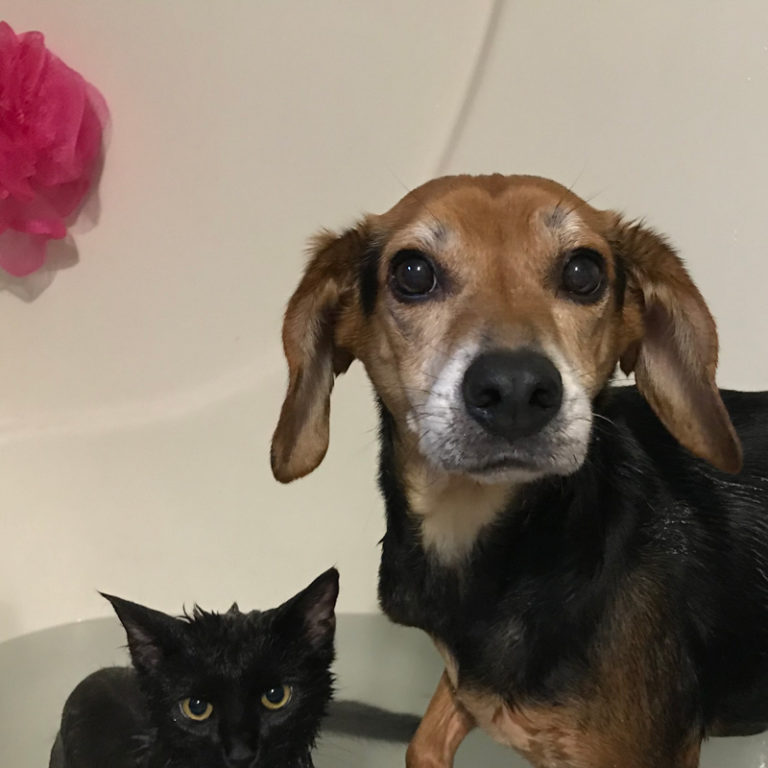 a black cat and beagle in the bathtub