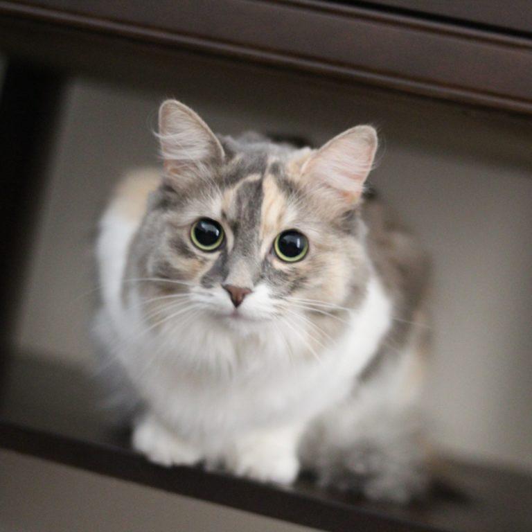 small sad cat