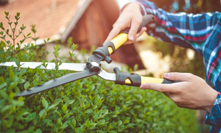 hands holding shears and cutting hedges