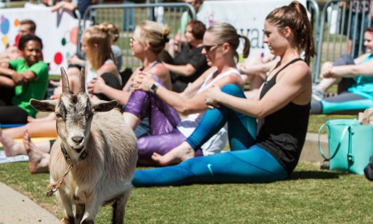 women doing yoga near a goat