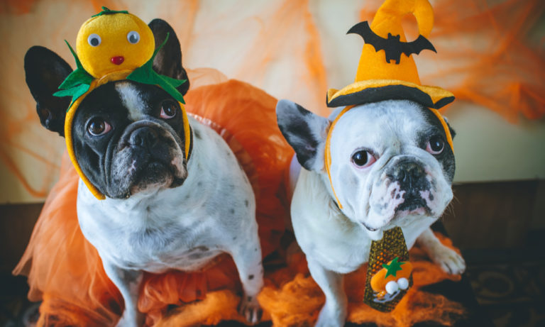 two dogs dressed in Halloween costumes