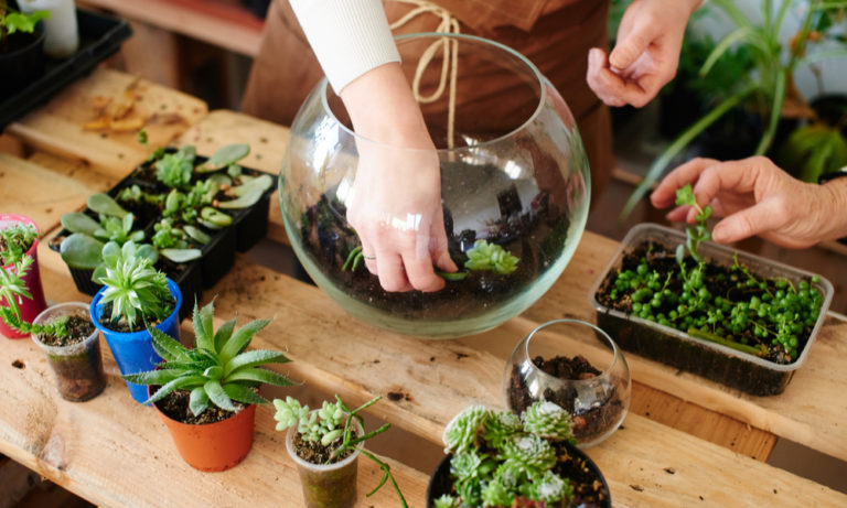 two women planting succulents in glass bowls